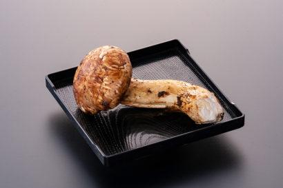 お土産用松茸